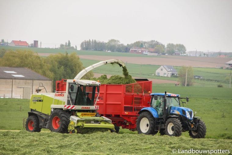 Gras hakselen 2015 - Maesen - Claas Jaguar 890