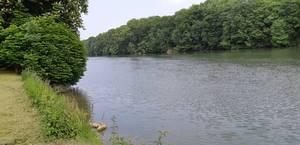 Pêche au feeder en Seine à Andresy (78)