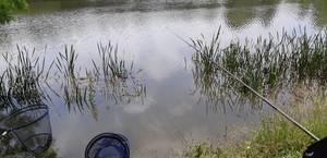 Pêche à Emerainville (77) 8 06 2018
