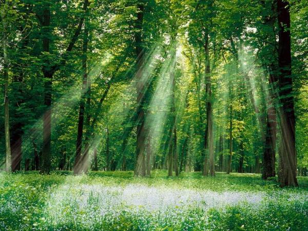 Forêt parallèle