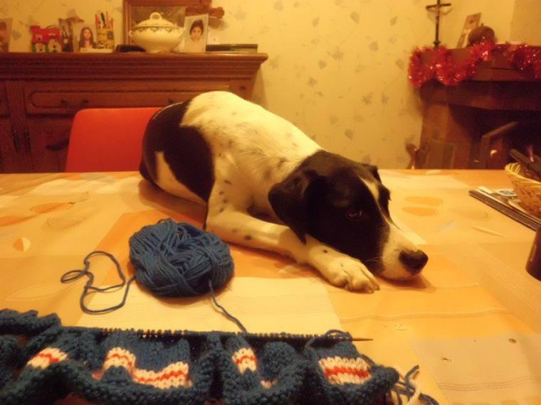 ma compagne de tricot.