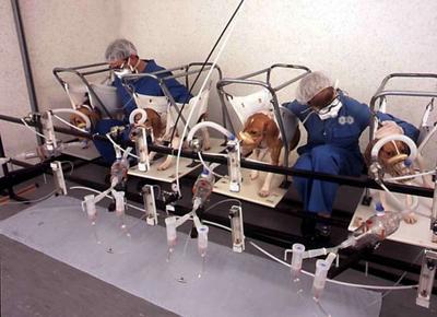 La vivisection doit être rejetée d'abord comme inutile au progrès de la thérapeutique, ensuite comme immorale en raison de son incontestable cruauté