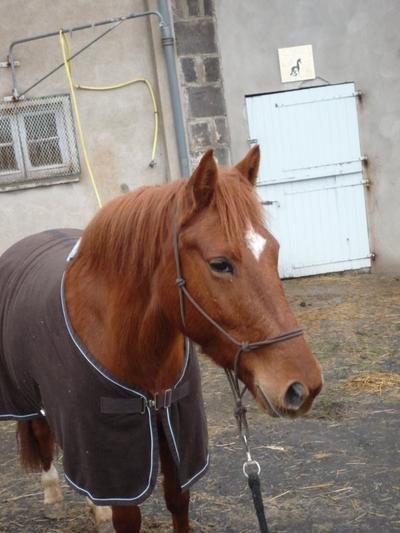 Parce-qu'être à cheval c'est la raison de vivre de tous cavalier