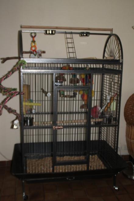 Cacahuète, ses cages, la toilette et ses premiers mots!