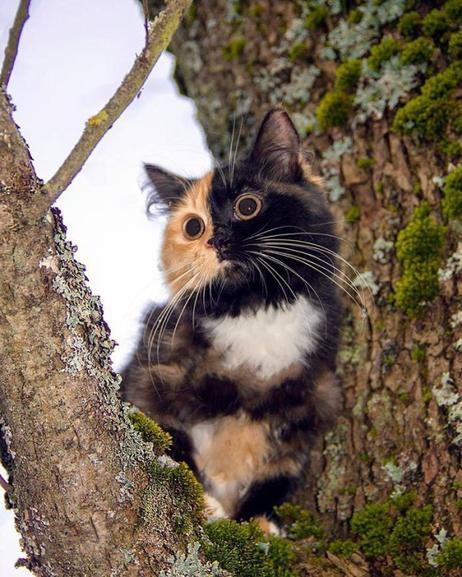 Un chat hors du commun
