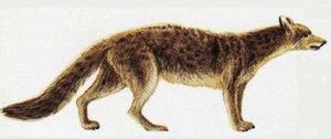 Caractéristiques du Loup en détail