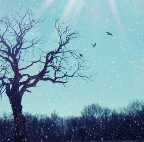 """""""Le bonheur est comme la neige : il est doux, il est pur et... il fond."""" - Claire Malesset -"""