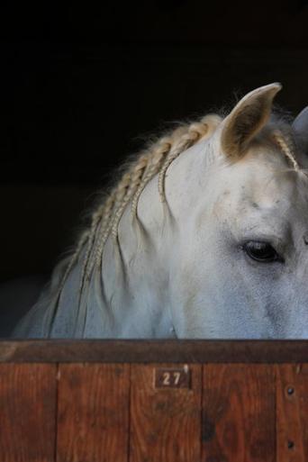 Les chevaux et autre poneys !