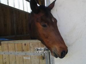 - Quelques photos de mon Centre Equestre