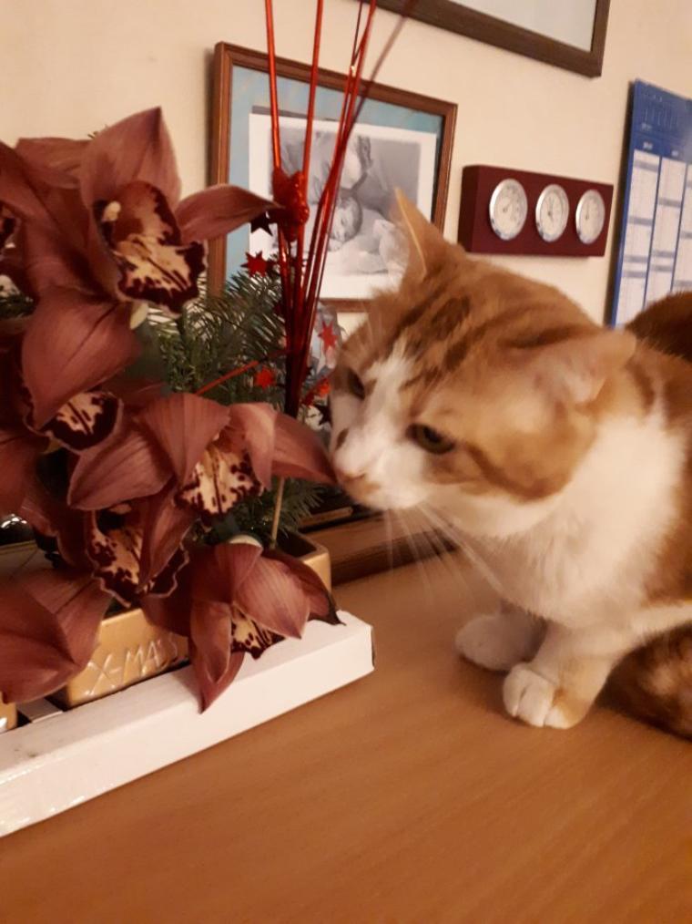 Coucou c moi caramel j'aime pas les plantes et les fleurs