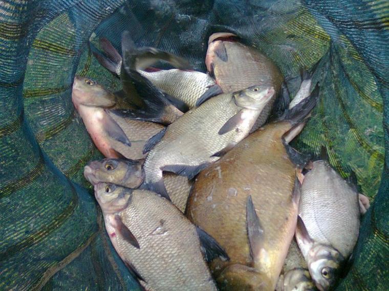 une pêche en marne