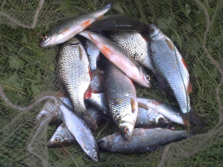 petite pêche en seine