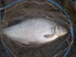 Faut vraiment aimer la pêche...............