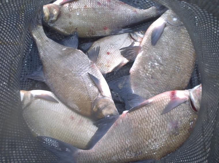 deux mâtiné de pêche
