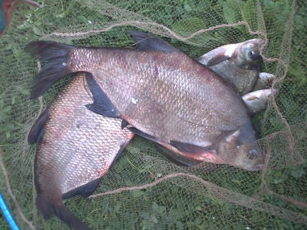 une pêche dans la grissalle