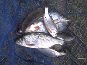 petit pêche a l'anglaise