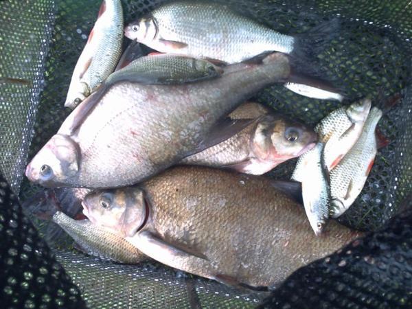 deux pêches différente