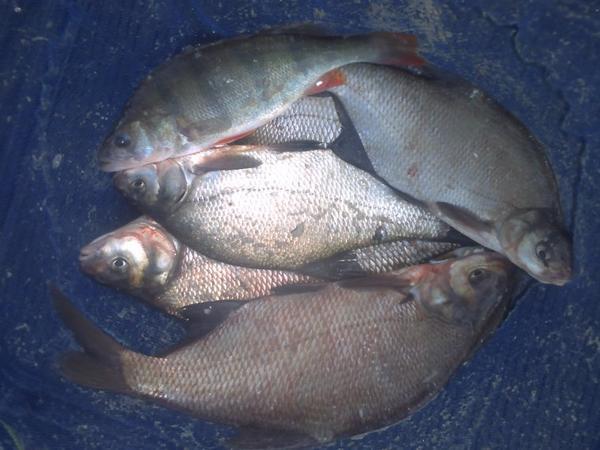Alfortville et sa pêche