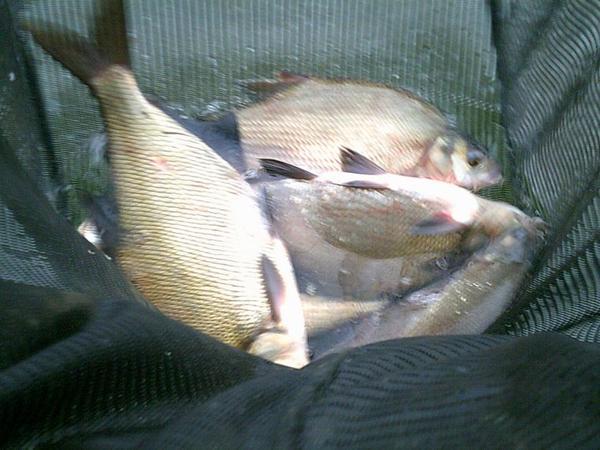 pêche feeder a Alfortville
