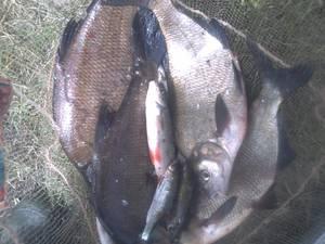 sa pêche en seine 91