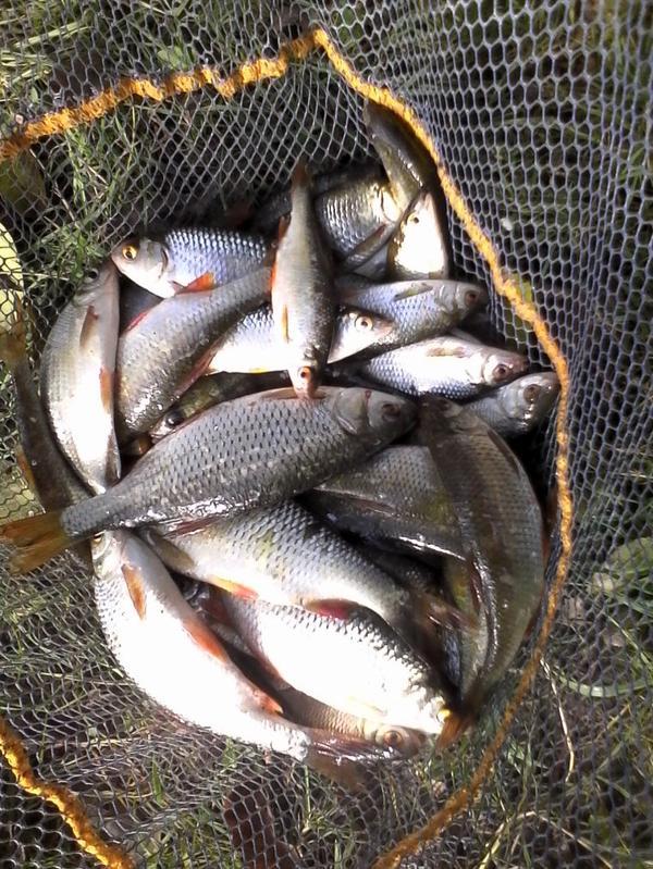la passion de la pêche au coup