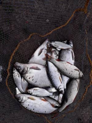 pêche technique du 14 avril 2018