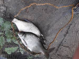 pêche en marne dimanche 22 juillet 2018