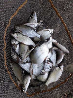 une matiner de pêche