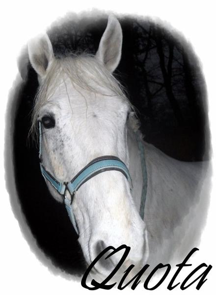 Ces deux autres poneys ...♥