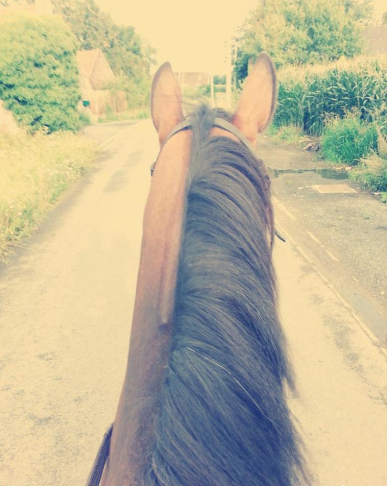 On ne renonce jamais aux chevaux vous savez, ça fait dix mille ans que les humains tentent de dresser les chevaux. Chaque humain recommence avec chaque cheval, le même travail, la même aventure, difficile et périlleuse. Dix mille ans qu'on tombe, dix mille ans qu'on se relève, qu'on invente les voitures, qu'on invente les avions, et pourtant on continue à monter à cheval...