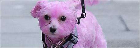 Le mystère du chien rose...