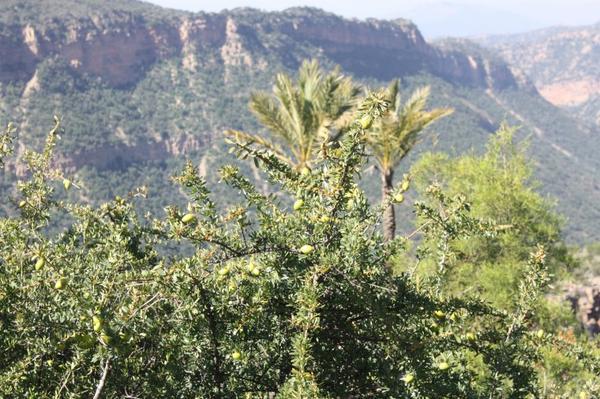 Suite ^^ ......Cascades Imouzzèr-des Ida-Outanane & ( la Vallée du Paradis) <3