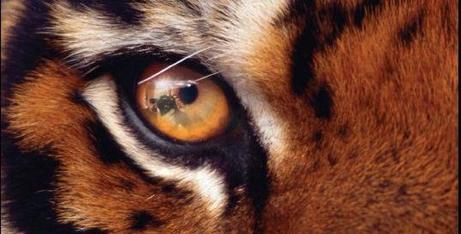 SURVIVOR et histoire d'yeux