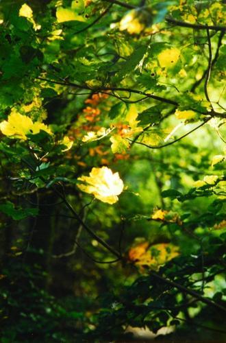 PHOTOS PERSO + POESOUILLERIE - Feuille à fleur