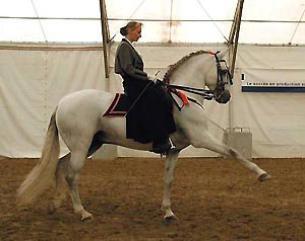 [Équitation éthologique] Tours de cirque: le pas espagnol