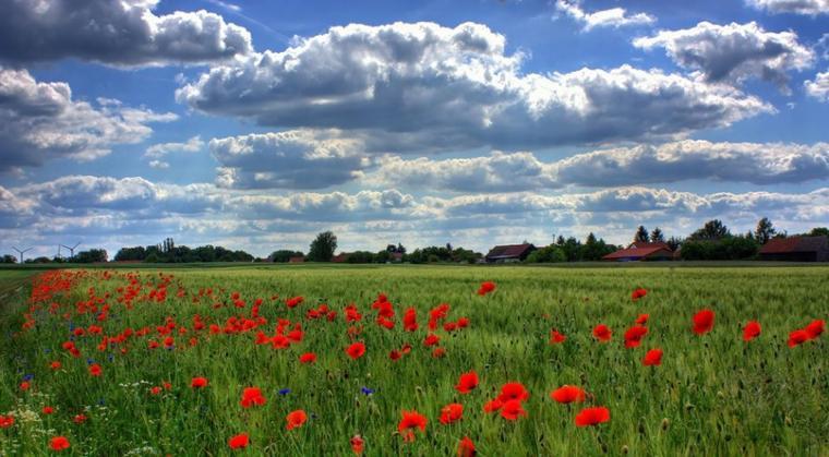La beauté des champs