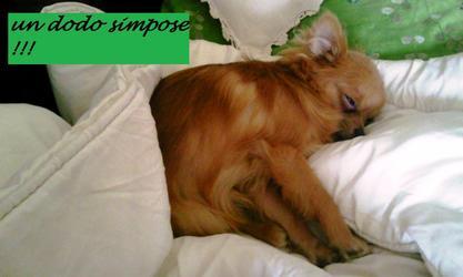 Plusieurs façons de dormire