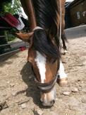 Apprendre à écouter son cheval pour mieux progresser !