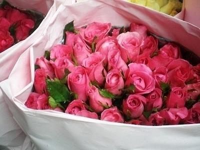 « Le souvenir est une rose au parfum discret que l'on arrose avec les larmes du regret. » Claire Malesset