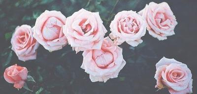 « On ne sait jamais pourquoi on tombe amoureux de quelqu'un : c'est même à cela qu'on reconnaît qu'on aime. » Francis de Croisset