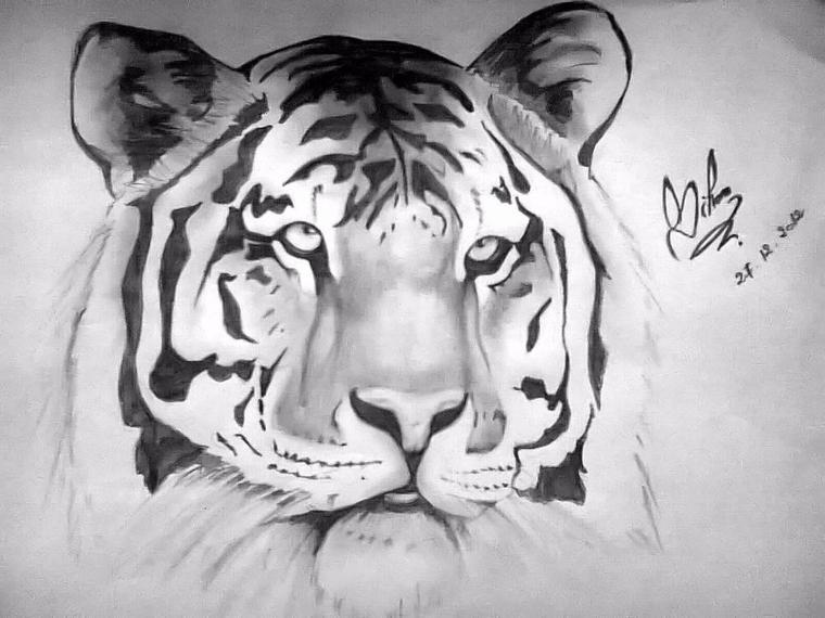 Dessin Tigre Dessin Fait Par Siham Bouyerbou Siham S Drawing Dz