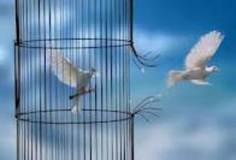 La liberté : On la frolle à peine et elle s'envolle comme un papillon a peine eflleurer par une main innocente