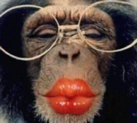 Il est beau le singe !