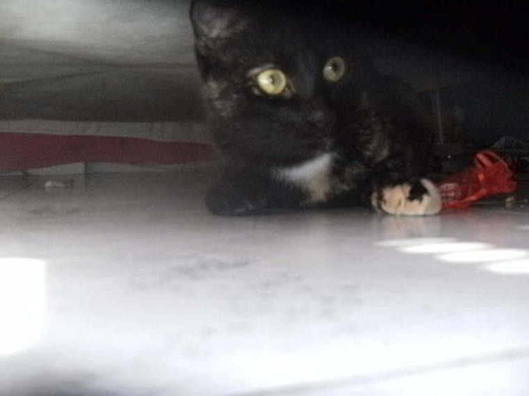 Sous le lit
