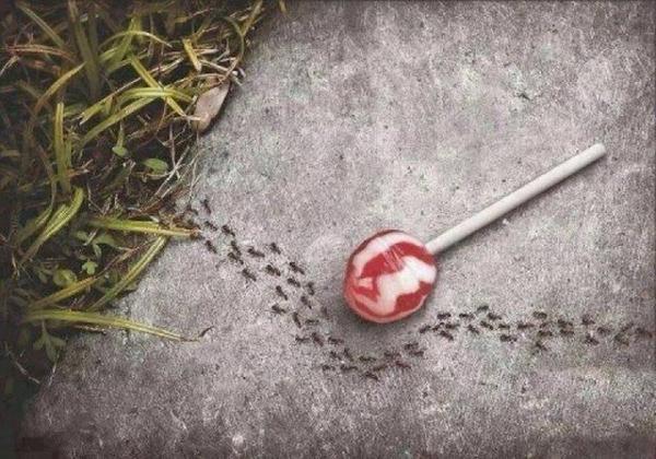 Même les fourmis font le Ramadan!
