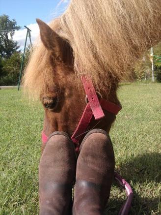 Après-midi en compagnie d'un poney sympathique