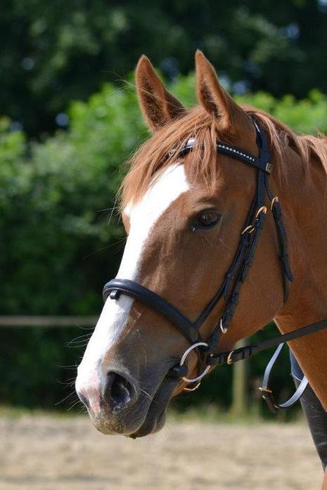 > il y a plusieurs endroits merveilleux dans le monde, mais l'endroit que je préfère avant tout, est le dos de mon cheval.