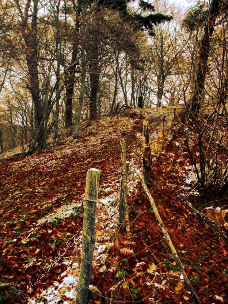 Le chemin de la nature