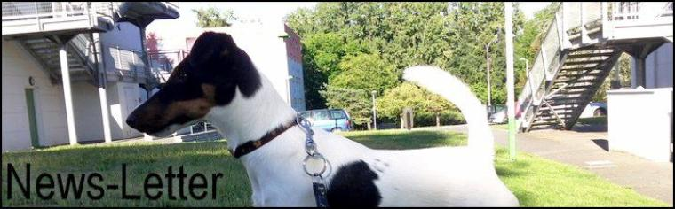 Smooth-FT le blog Info & Actu du Fox-Terrier poil lisse