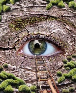 L'arbre... Vous avez dit l'Arbre... et la forêt alors? !  Insolite quand même.... :-)  Citations en Images